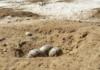 colonia de aves protegidas en ayamonte