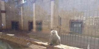 denuncia al zoo de ayamonte