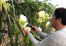 pitaya de Cartaya
